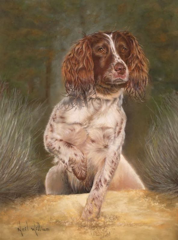 Paintings of Dogs,Springer Spaniel